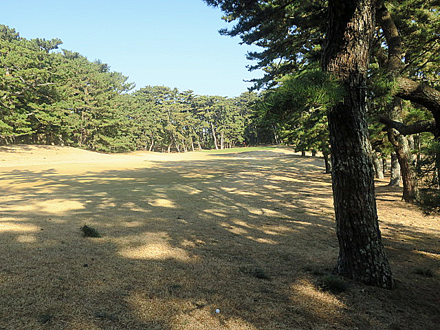 201612OHARAI GC NO5-2