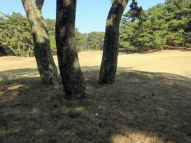 201612OHARAI GC NO7-3